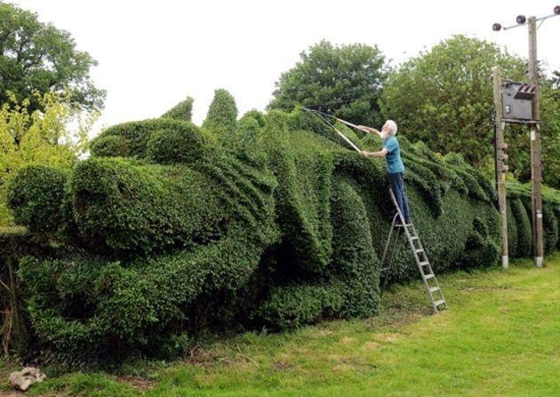 dragon-hedge-1