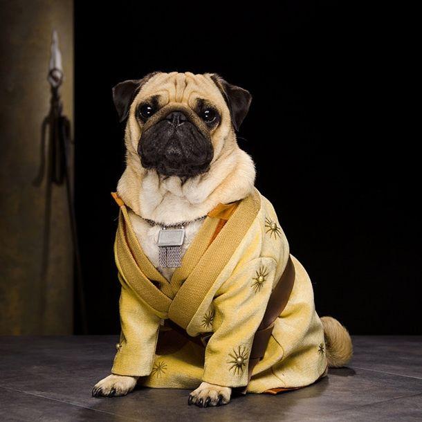 pugs-of-westeros-3