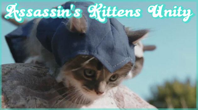 伝説のアサシンに扮したキュートな子猫たちのパロディ動画