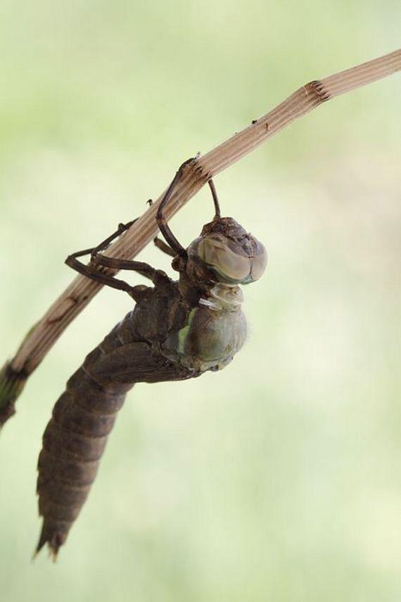 02-birth_dragonfly