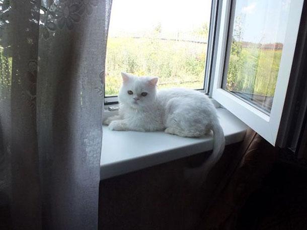 cat_rescue_23