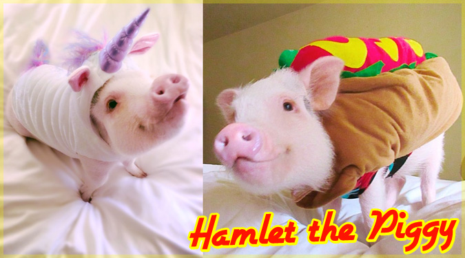 とある夫婦が飼っているとってもキュートなペットの豚さん!