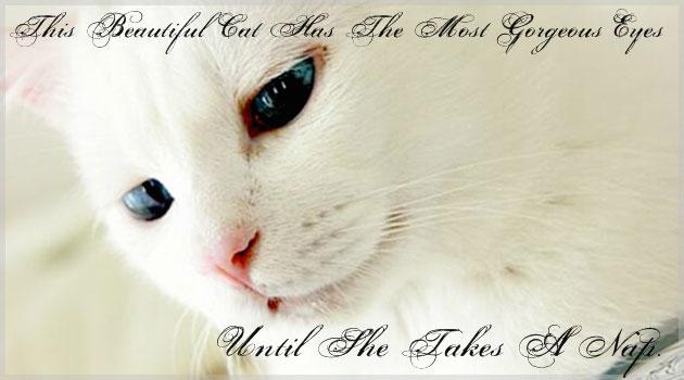 世界中で話題の美しすぎるネコ!寝顔のギャップが酷い