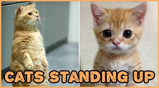 二足で立つ不思議な行動をとらえたネコの17枚の写真集