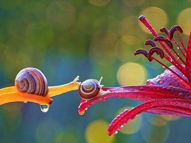 macro-photography-snails-vyacheslav-mishchenko-2