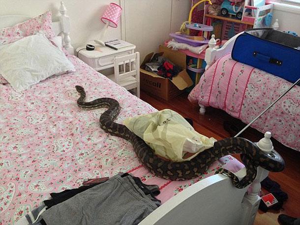 surprise_snake_03