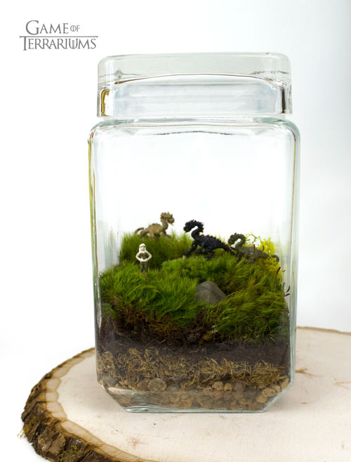 geek_moss_terrariums_02