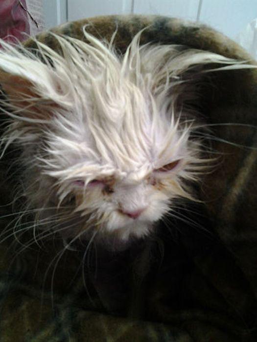 cat_rescue_05