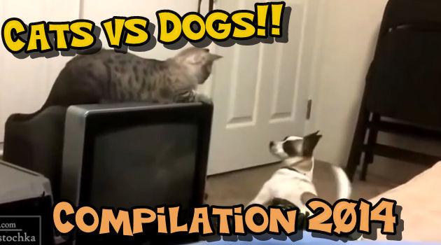 猫と犬の因縁の戦いは止まらない!猫VS犬のまとめ動画!