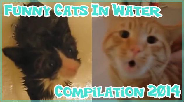 水に触れるネコたちの反応が面白くて可愛い!ネコと水2014!