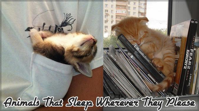 あらゆる所で眠る動物たちの姿をとらえた愛らしい写真シリーズ!