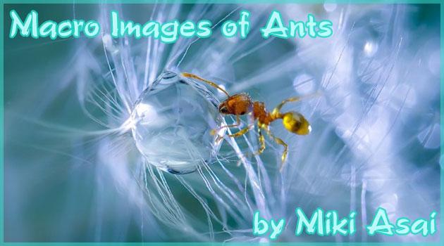 マクロレンズを通して映し出された美しきアリの世界
