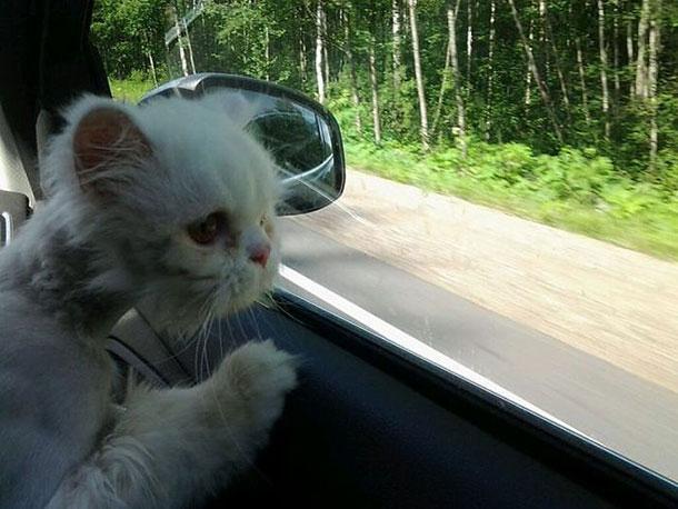cat_rescue_13