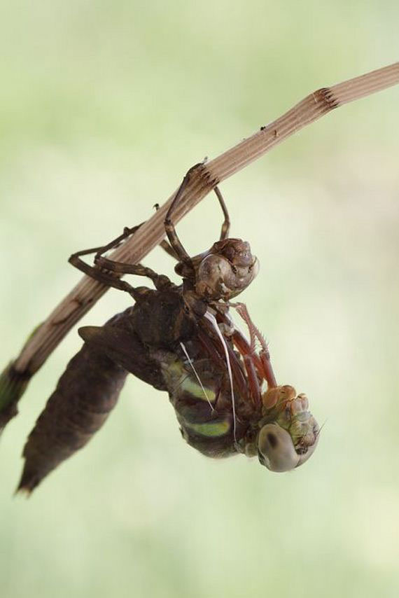 05-birth_dragonfly