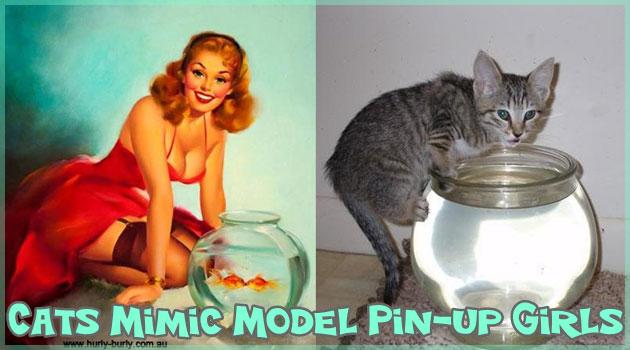 ピンナップガールを真似る可愛らしいネコさん写真集