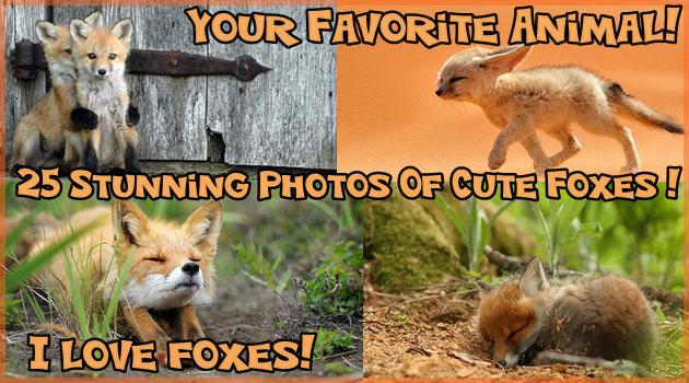 イヌやネコに負けない魅力!かわいいキツネの25枚の写真集