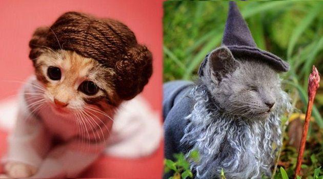 人気キャラクターにコスプレした可愛い子猫の画像集