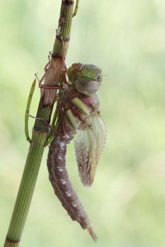 07-birth_dragonfly