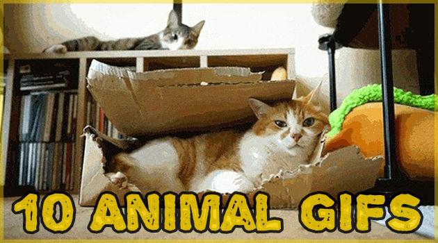 面白くて可愛い動物達の10枚のGIFアニメーション画像集