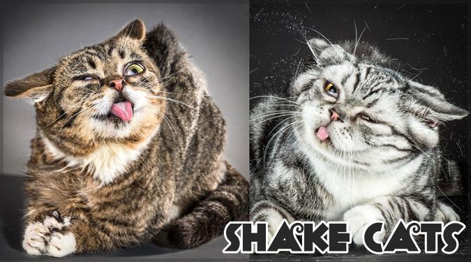 ネコが頭をブルブルしたときの表情を撮影したユニークな写真集!