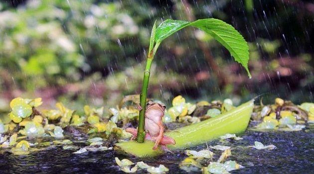 本物の自然界を生き抜く生物たちの感動的な24枚の写真