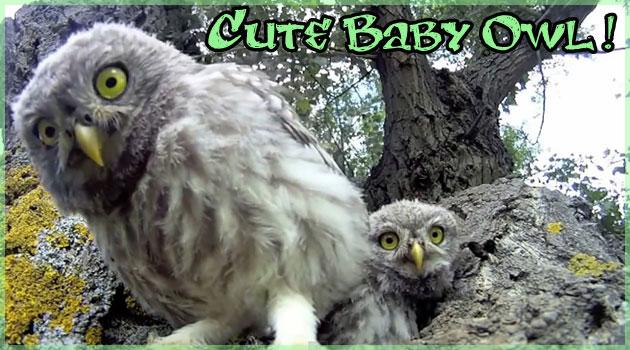 巣の前にカメラを設置して撮影した可愛いフクロウたち