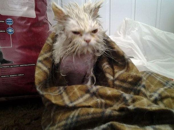 cat_rescue_04