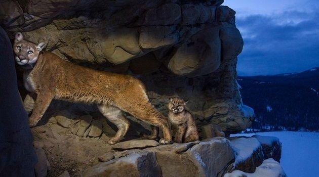 素晴らしい自然界をとらえた生物たちの美しい24枚の写真