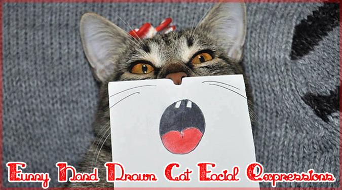 飼い主の手描きのイラストで表情が豊かになったネコちゃん!