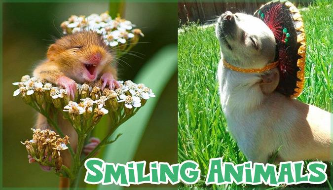 あなたを笑顔にする!笑顔いっぱいの動物たちの写真集