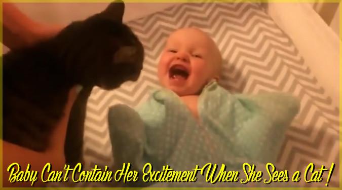 ネコを初めて見た赤ちゃん!両手両足をパタパタさせて大はしゃぎ!