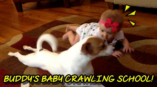一生懸命な赤ちゃんにハイハイを教えてあげるワンちゃん!