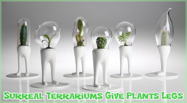 植物に美脚を与えたシュールなテラリウム!まるで宇宙人!