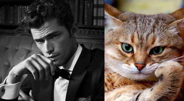 1384788386_cats_vs_models_16