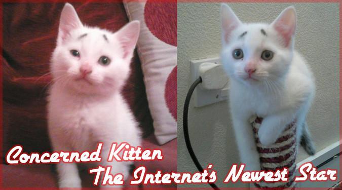 困り眉毛を持つしょぼーんとした顔の子猫ゲイリーちゃん!