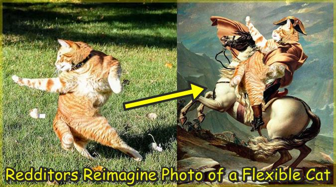 おかしなポーズのネコちゃんをPhotoshopで加工した爆笑画像集!