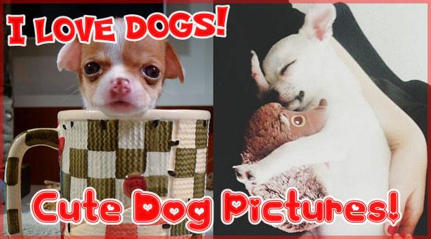 犬の写真コンテストで集められた可愛いくて面白い犬たち!