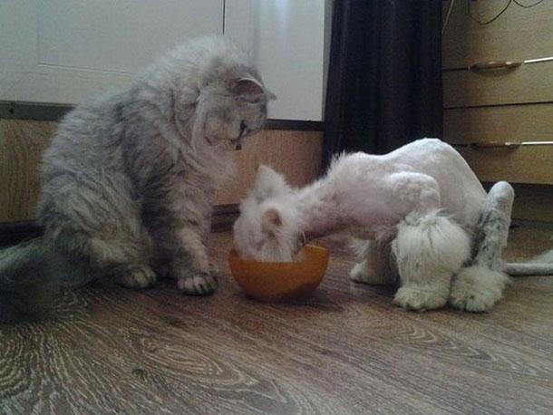 cat_rescue_10