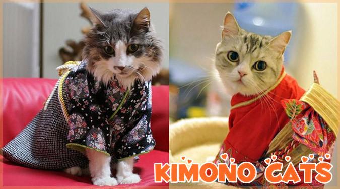 日本の着物とネコを組み合わせた可愛すぎる写真集!