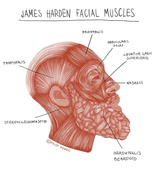 james-harden-illustration-4