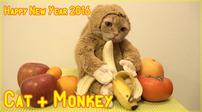 2016年の干支である猿に変身したキュートなネコちゃん!