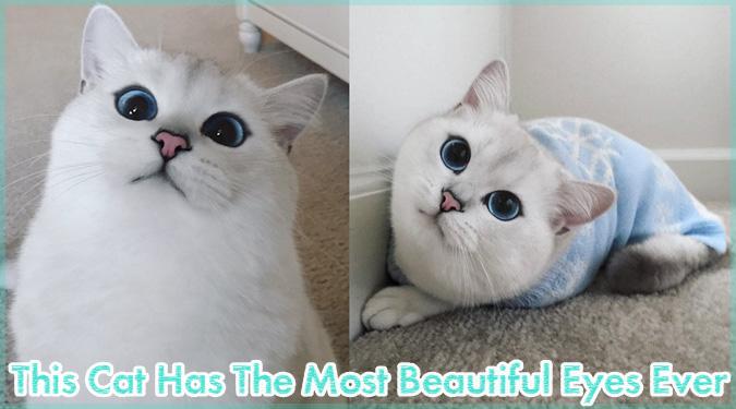 青くて大きな瞳を持つ美しい白猫が話題に!綺麗な瞳に吸い込まれる!