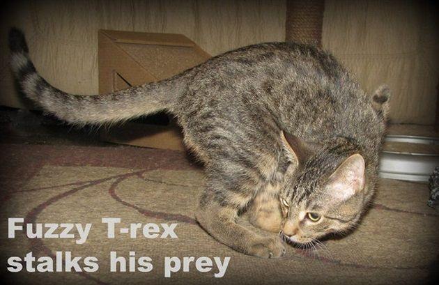 t-rex-kitty-2