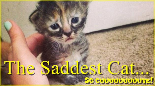 今にも泣き出しそうな子猫!悲しそうな表情が可愛い