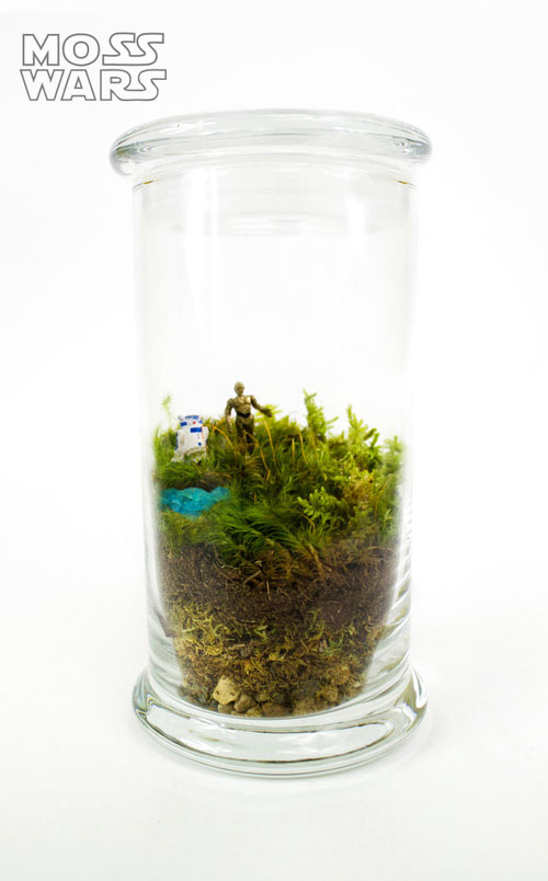 geek_moss_terrariums_01