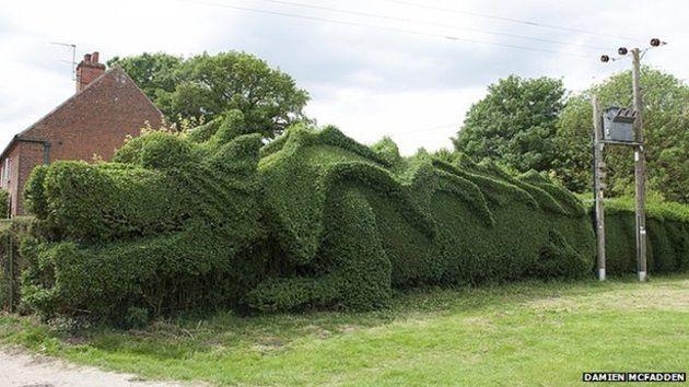dragon-hedge-3