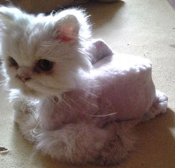 cat_rescue_08