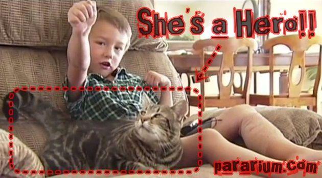 日本や海外で話題の動画!幼児を救ったネコのヒーロー!