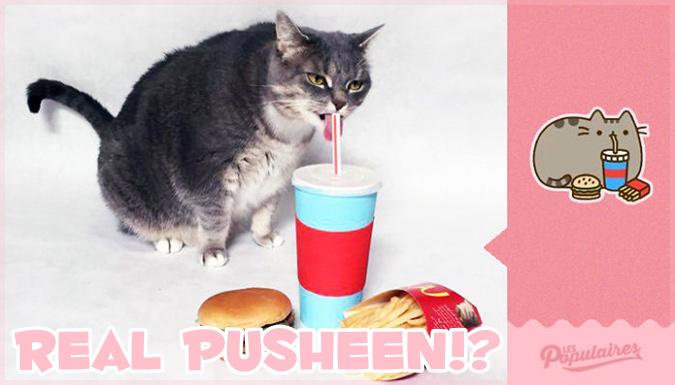 Facebookのプシーンのステッカーを本物のネコちゃんで再現した写真作品