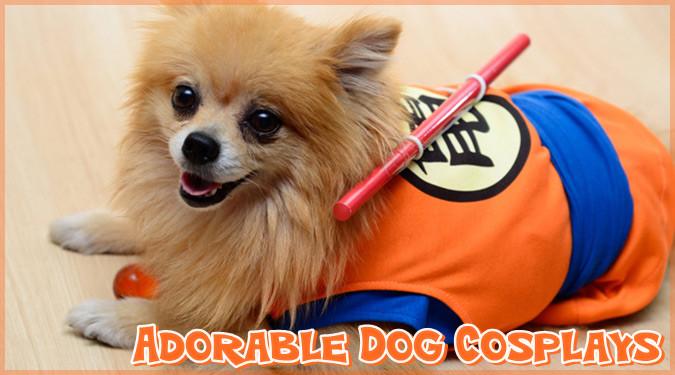 愛犬が人気キャラクターに変身!?イベントにピッタリの犬用コスプレ衣装!
